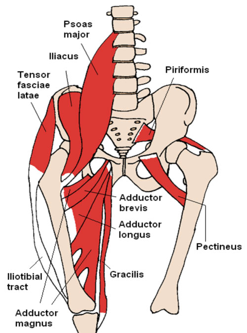 Groin Anatomy Diagram - Auto Wiring Diagram Today •