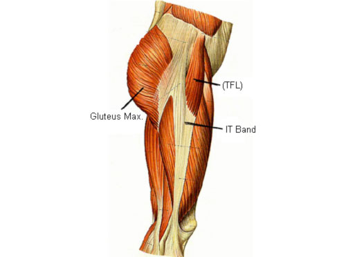 muscles of the lateral side of the thigh